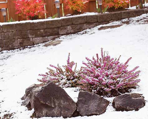 Winteryard_heather_blog